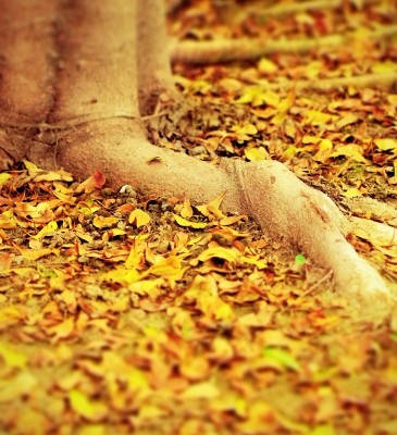Grounding: why we need it for healthy lives